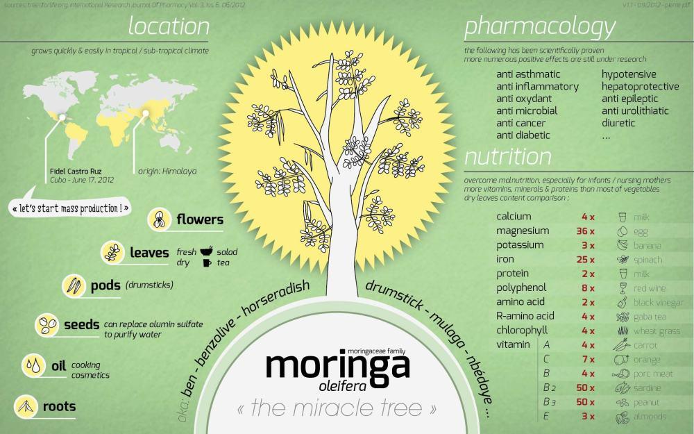 moringa_50647d76cb1bf